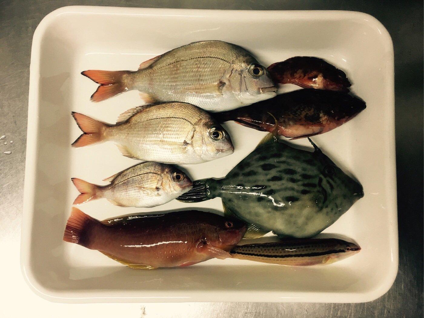 momoさんの投稿画像,写っている魚はマダイ,カワハギ,カサゴ,キュウセン,