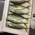 Y3JSBさんの徳島県美馬郡での釣果写真