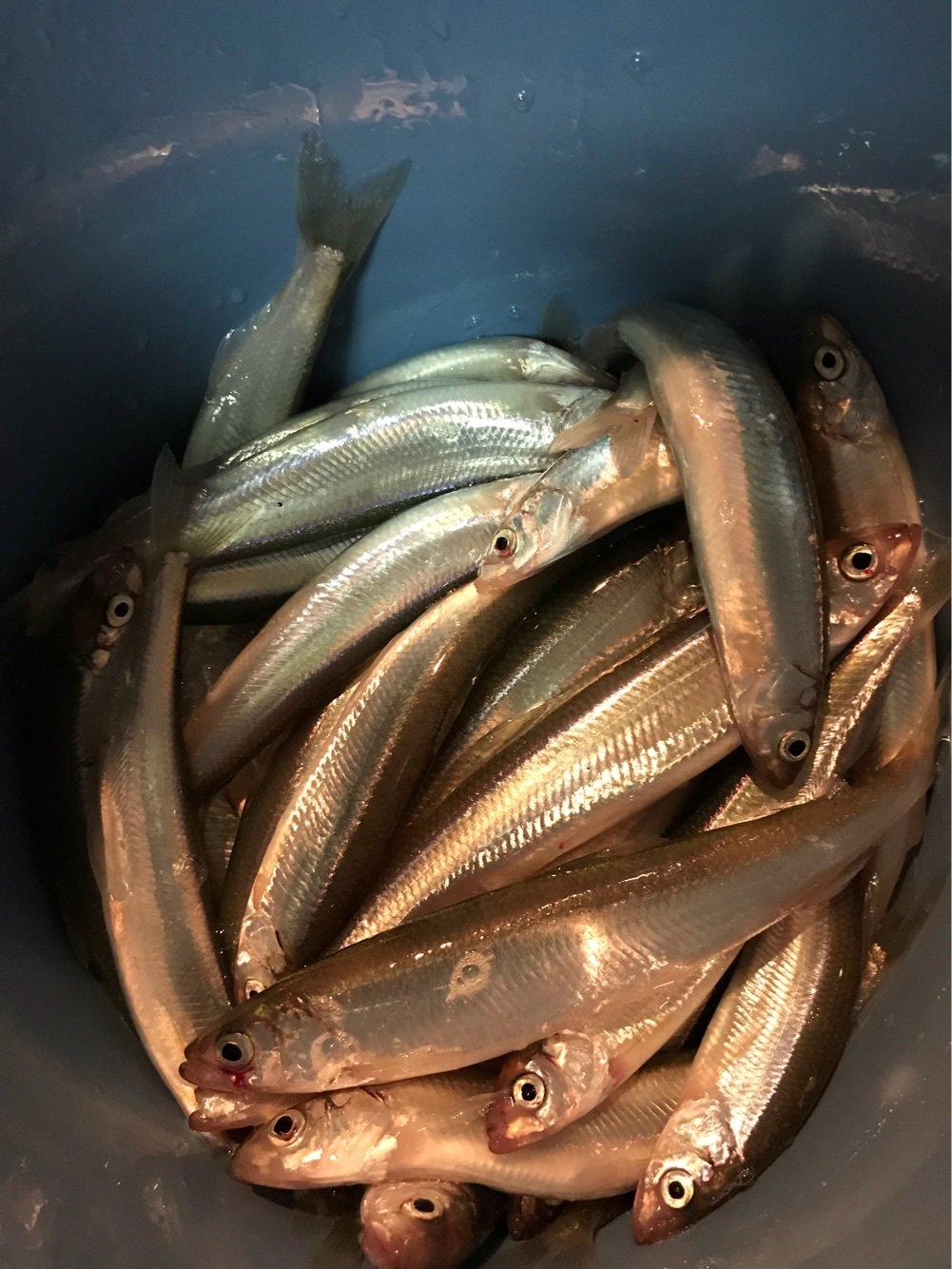 釣りバカさんの投稿画像,写っている魚は,