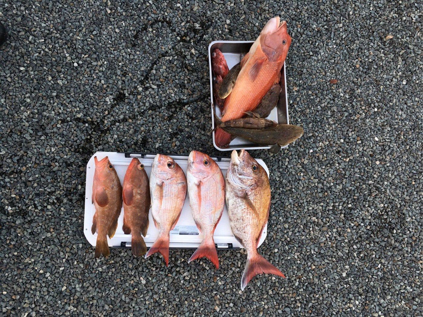魔〜坊さんの投稿画像,写っている魚はマダイ