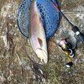 佐野さんの山梨県都留市での釣果写真