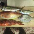 りゅうさんの東京都青ヶ島村での釣果写真