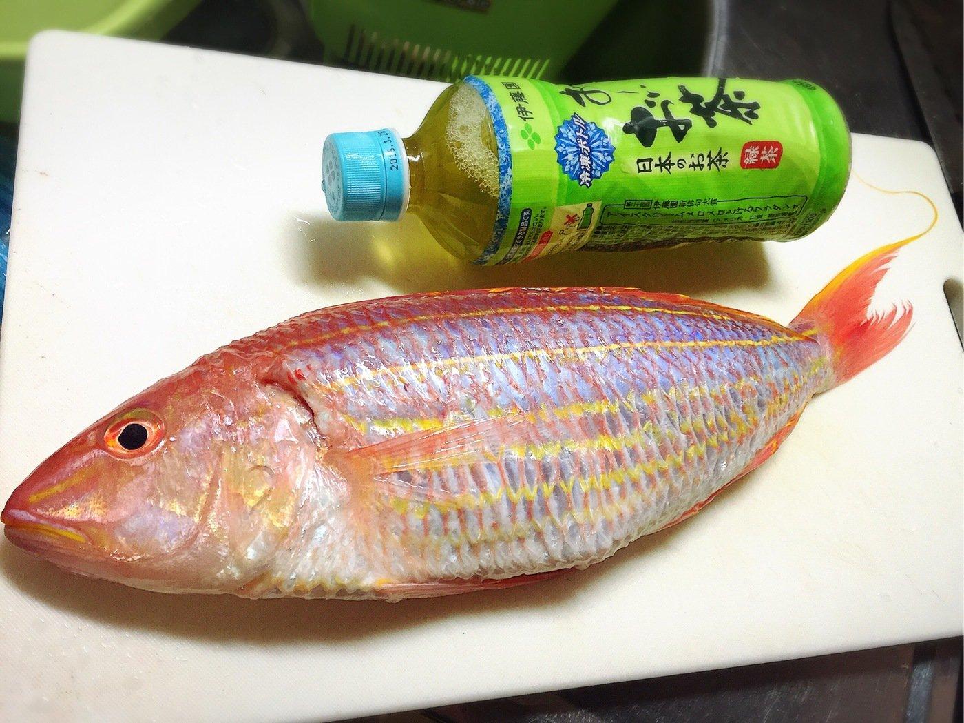 きみ☆チヌlove♡さんの投稿画像,写っている魚はイトヨリダイ