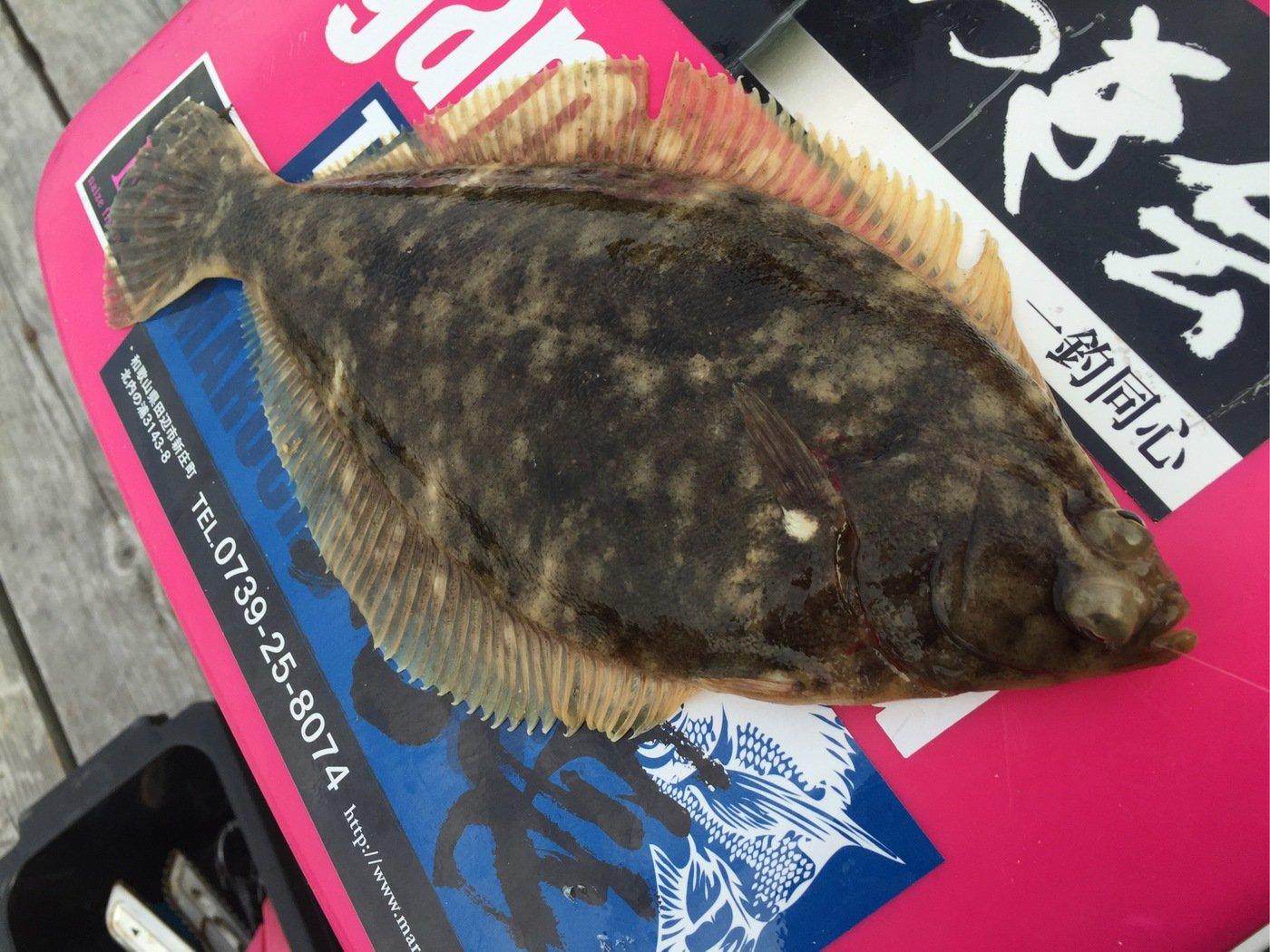 きみ☆チヌlove♡さんの投稿画像,写っている魚はカレイ