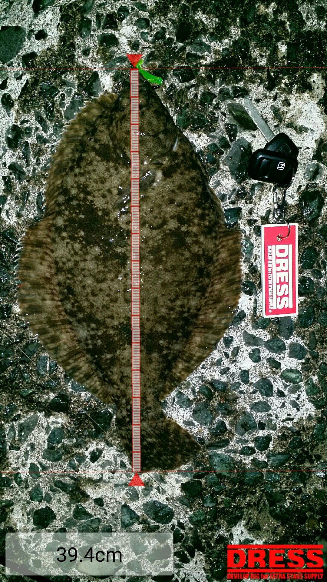 ネチラーさんの投稿画像,写っている魚はマコガレイ