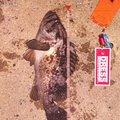 TOMOさんの富山県射水市でのクロソイの釣果写真