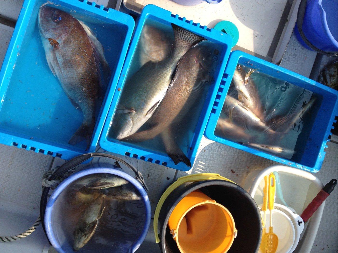 きみ☆チヌlove♡さんの投稿画像,写っている魚はブリ
