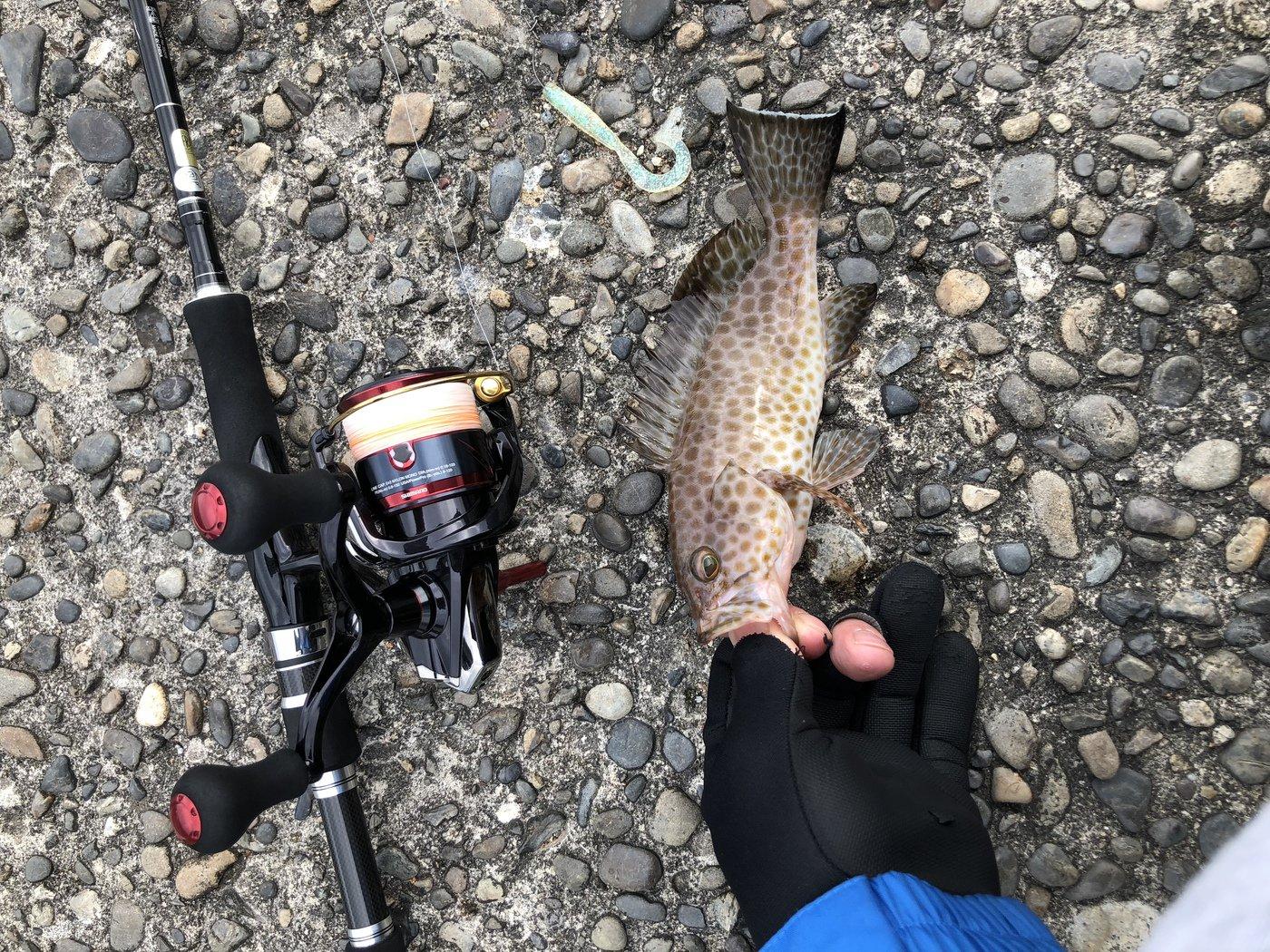 るーさんの投稿画像,写っている魚はオオモンハタ