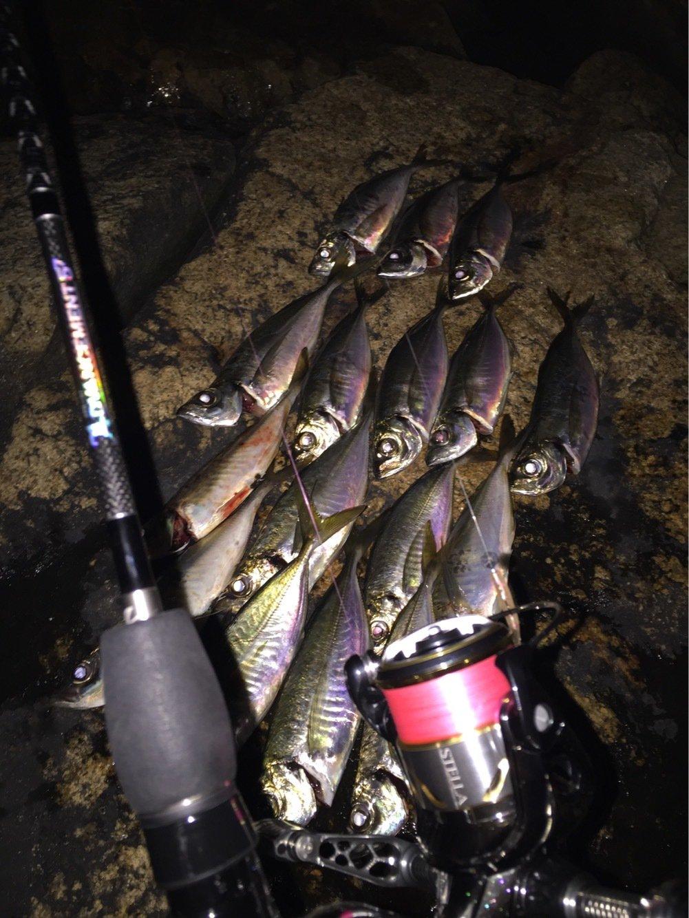 釣りマンさんの投稿画像,写っている魚はアジ