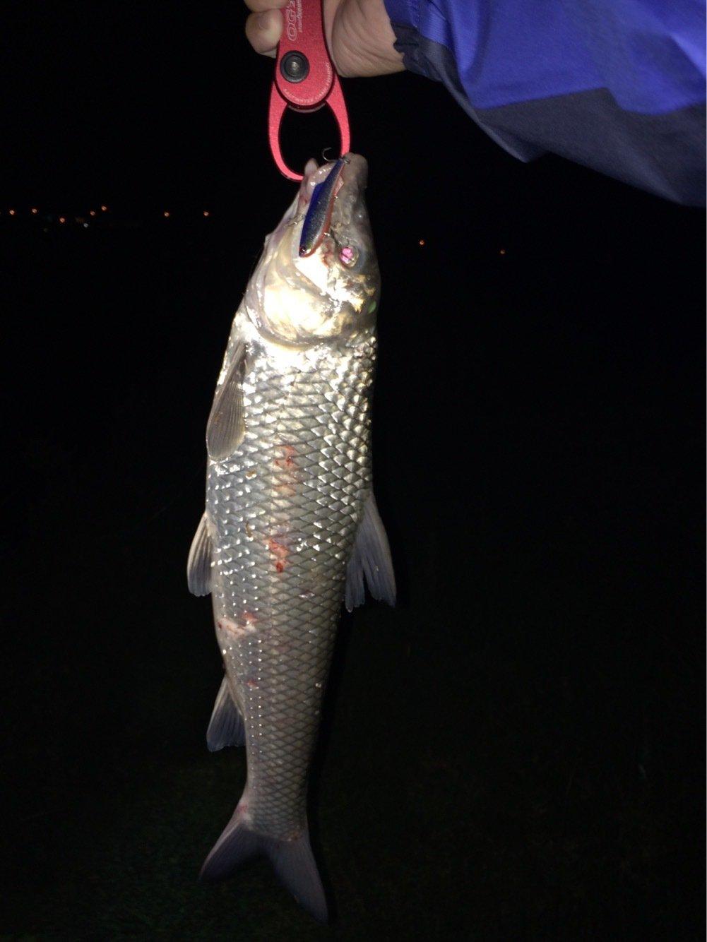 ともたろうさんの投稿画像,写っている魚はニゴイ