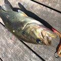 大隅カツ太郎さんの鹿児島県肝属郡での釣果写真