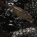 momoさんの北海道恵庭市での釣果写真