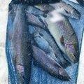 hope5544さんの青森県三戸郡での釣果写真