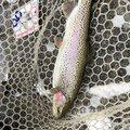 cootonsさんの滋賀県犬上郡での釣果写真