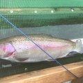 こいさんさんの青森県三戸郡での釣果写真