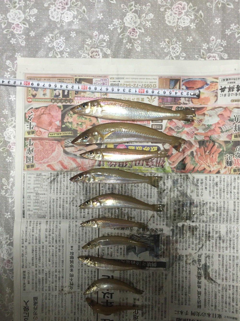 FPP48さんの投稿画像,写っている魚はシロギス