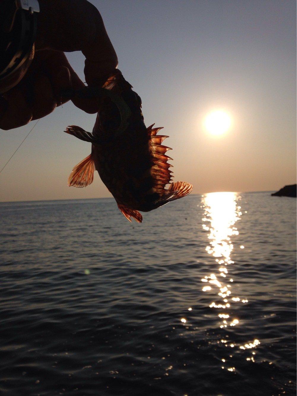 ヒルネさんの投稿画像,写っている魚はカサゴ