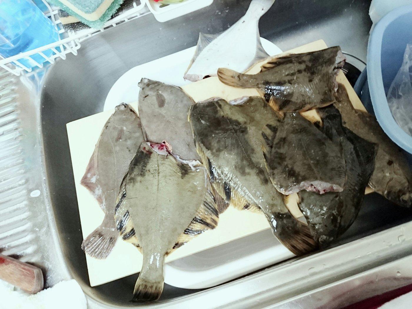 ハイラックス野郎さんの投稿画像,写っている魚はクロガレイ