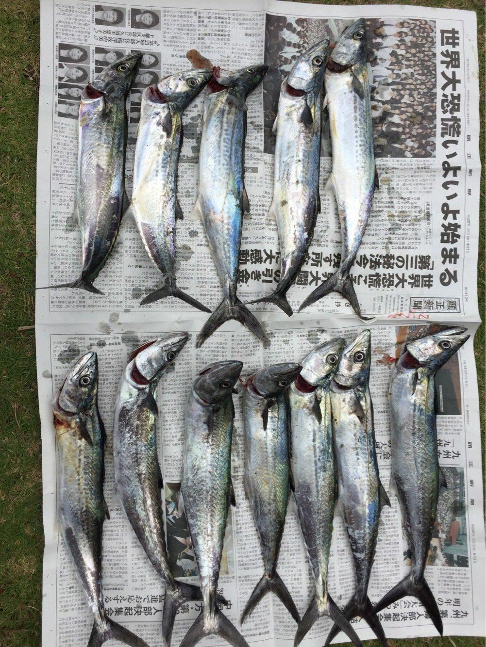 halさんの投稿画像,写っている魚はサワラ