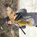 ADRENAさんの宮城県気仙沼市でのアイナメの釣果写真