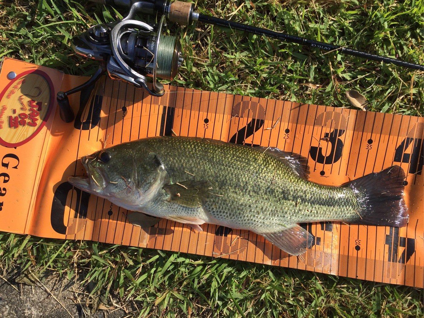 なかむーさんの投稿画像,写っている魚はブラックバス