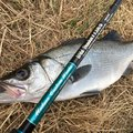 エンドウさんの長崎県壱岐市でのヒラスズキの釣果写真