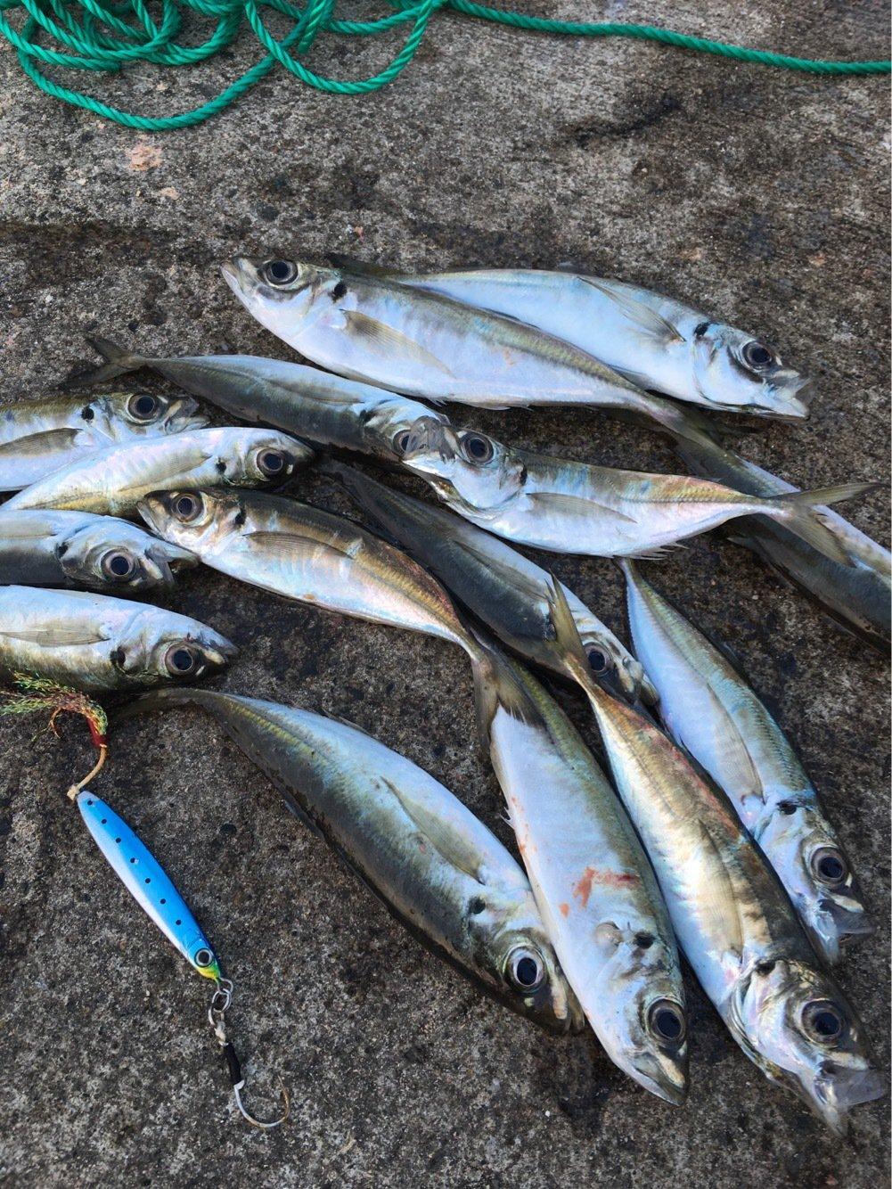 まっちさんの投稿画像,写っている魚はアジ