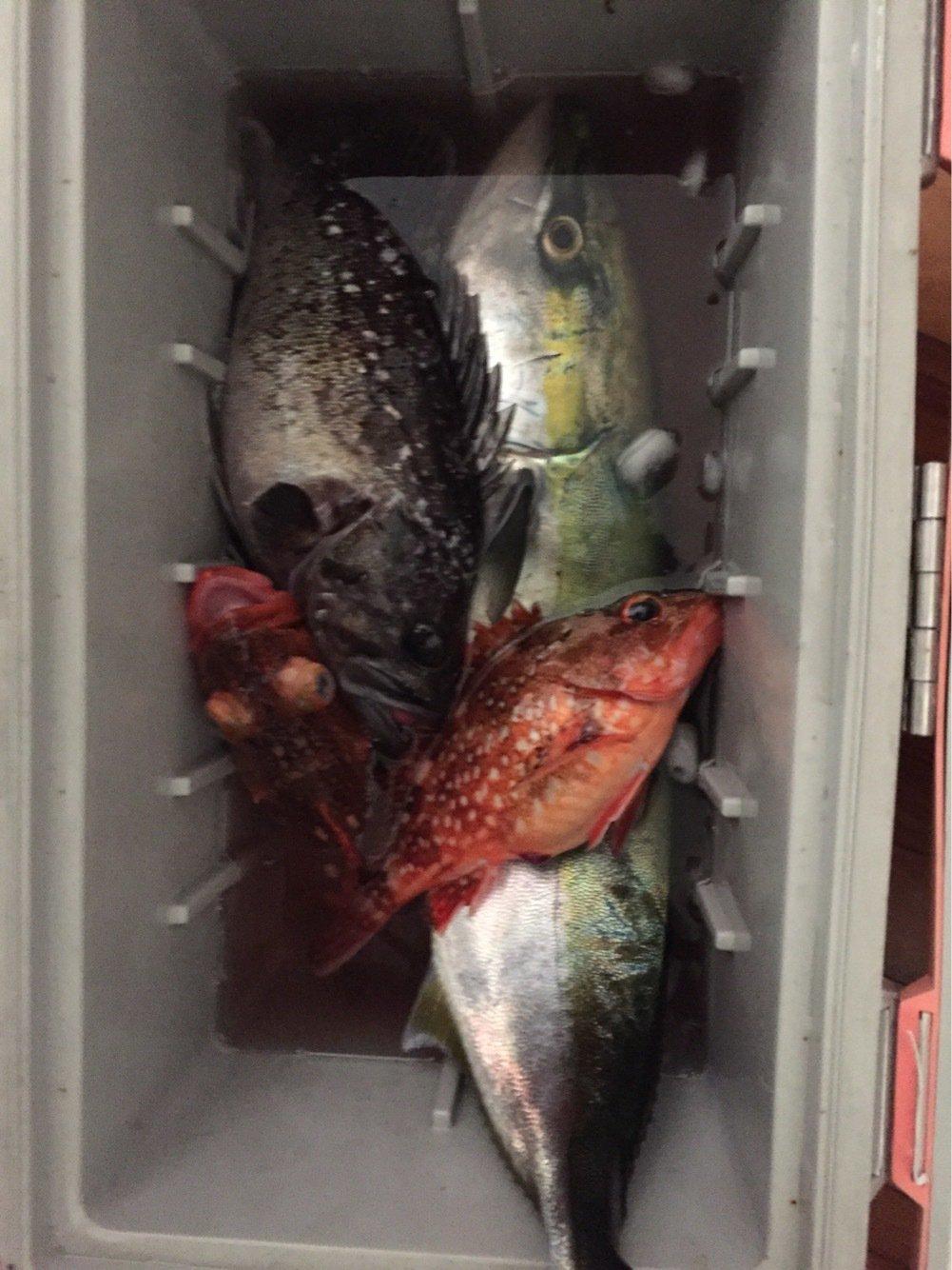 ビビさんの投稿画像,写っている魚はカサゴ