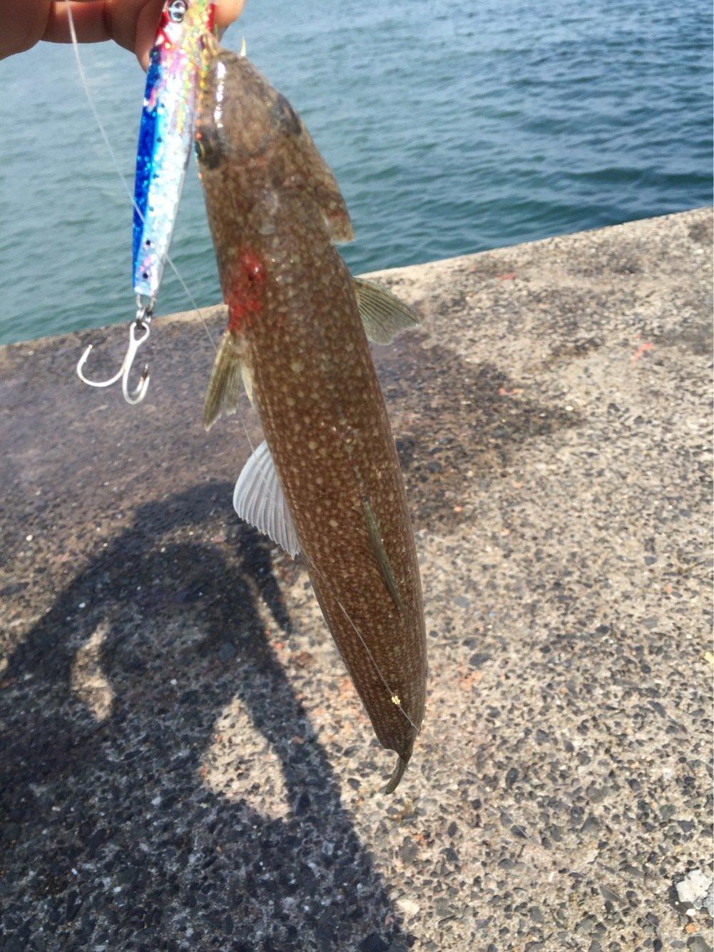 コスパのラパラさんの投稿画像,写っている魚は