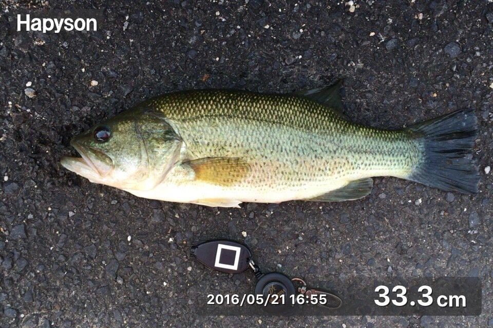 のすけさんの投稿画像,写っている魚はブラックバス