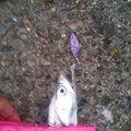 しんやさんの大阪府泉北郡でのタチウオの釣果写真