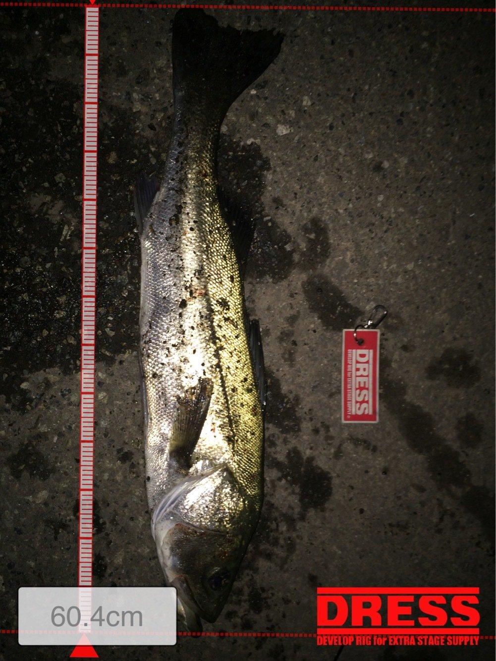 マリさんの投稿画像,写っている魚はスズキ