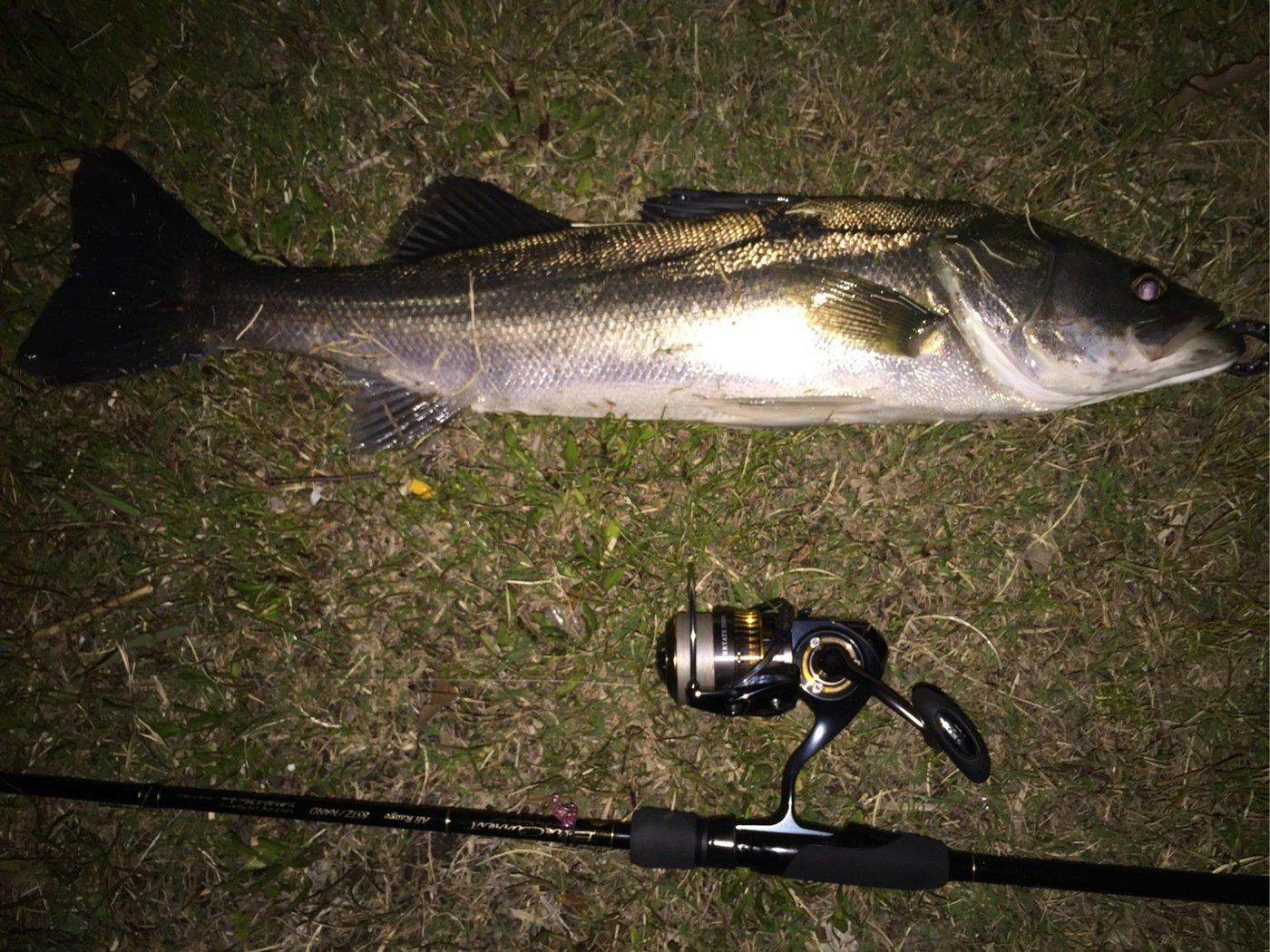 凜咲さんの投稿画像,写っている魚はスズキ