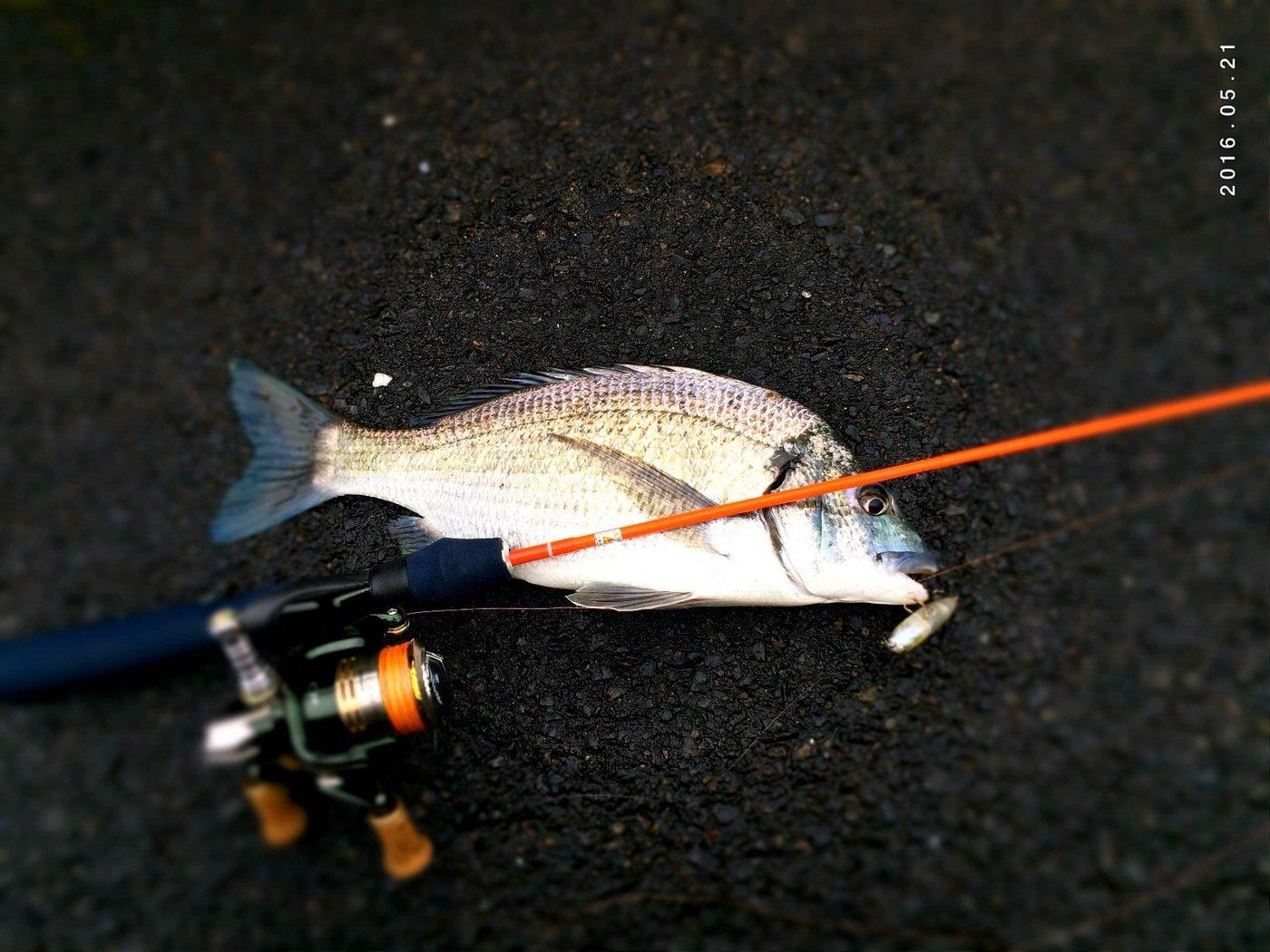 takechinさんの投稿画像,写っている魚は