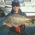 飛沫 shibukiさんの福岡県糸島市でのクロダイの釣果写真