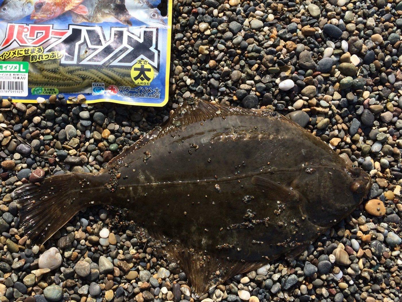 トホホさんの投稿画像,写っている魚はカレイ