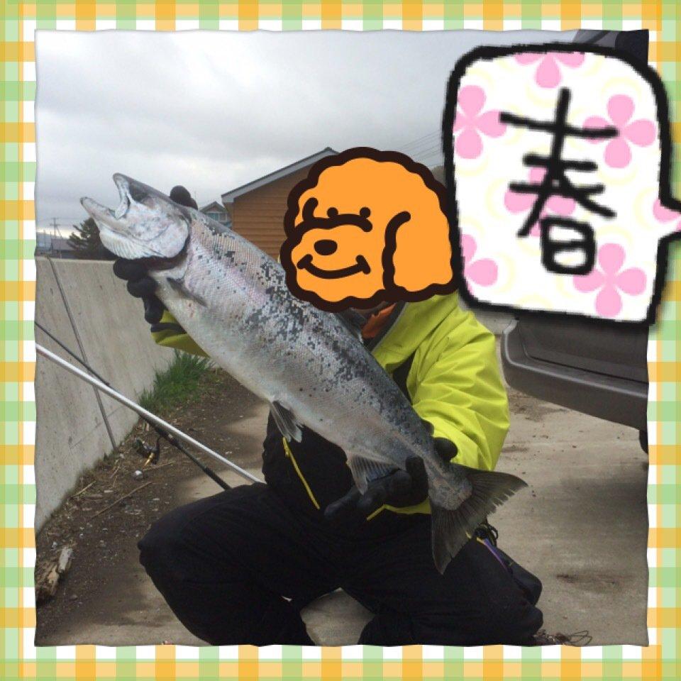 あべし。さんの投稿画像,写っている魚はサクラマス