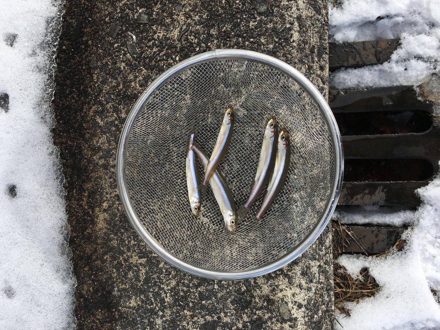 犬男さんの投稿画像,写っている魚はワカサギ