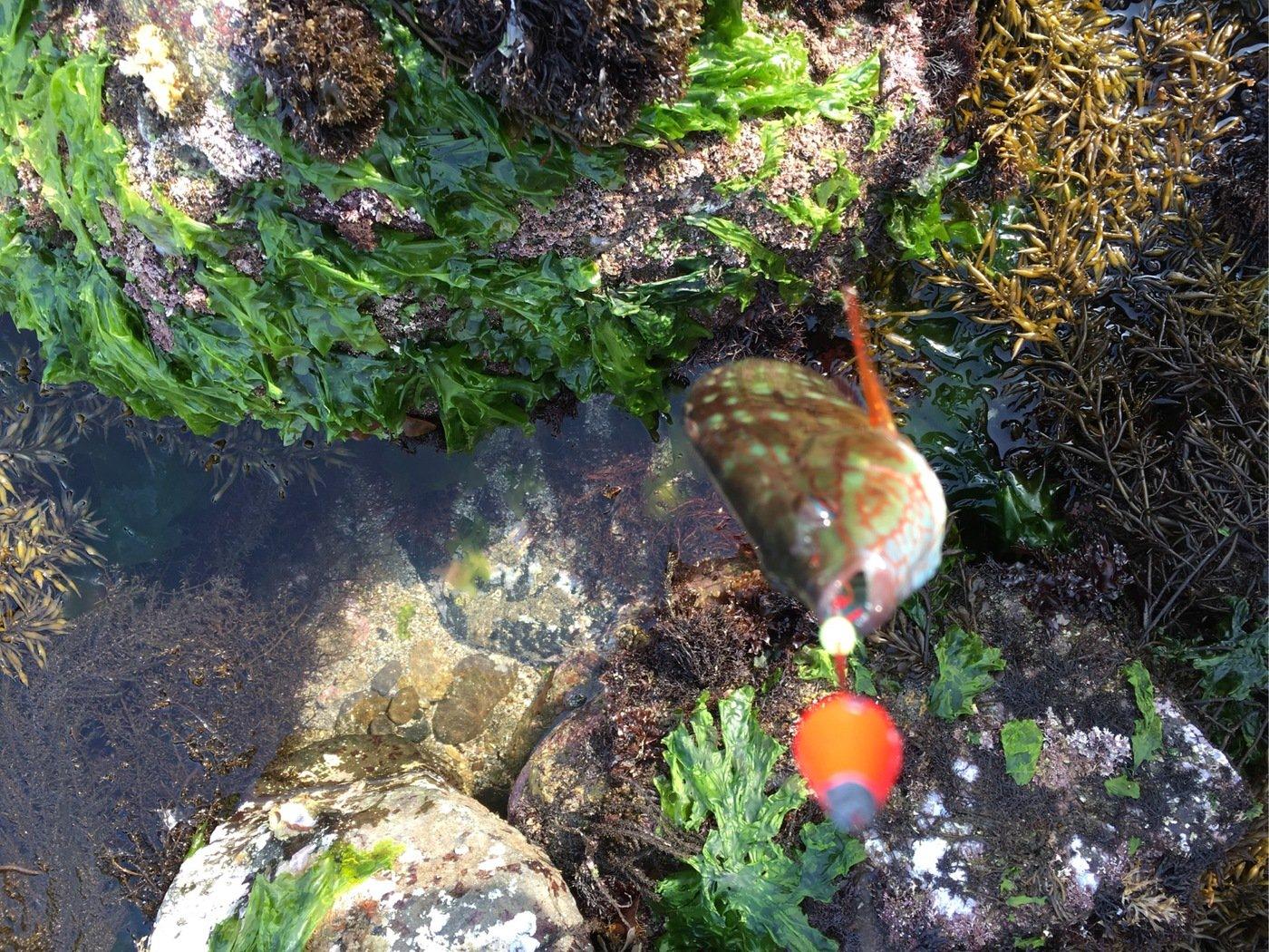 坂本 かけるさんの投稿画像,写っている魚は