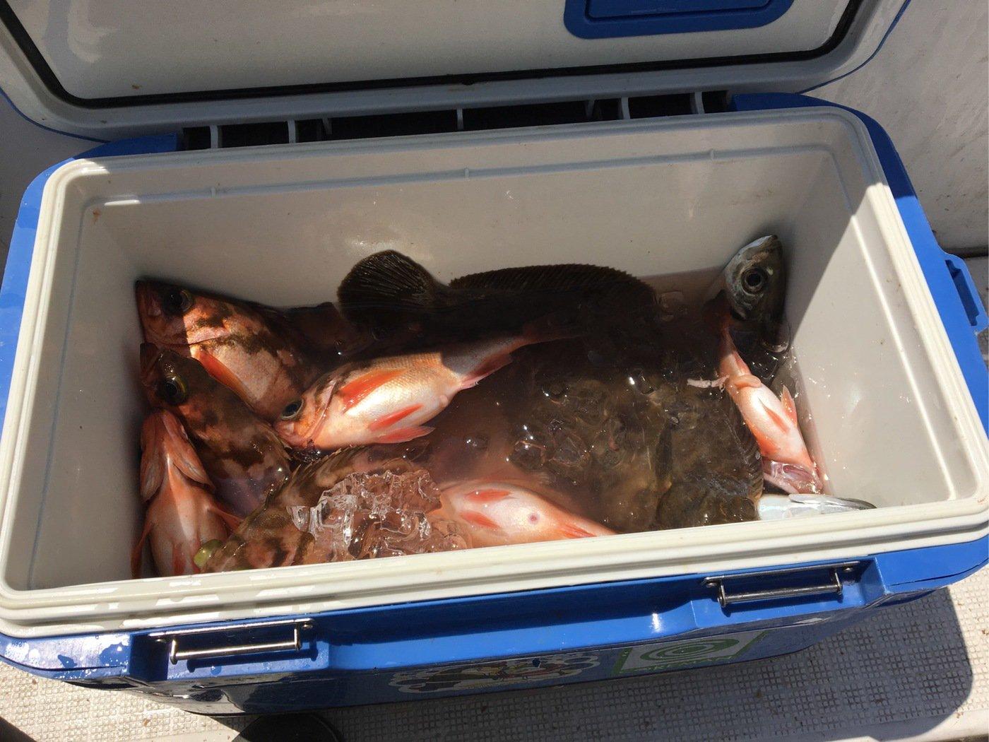 aoricyuさんの投稿画像,写っている魚はウスメバル