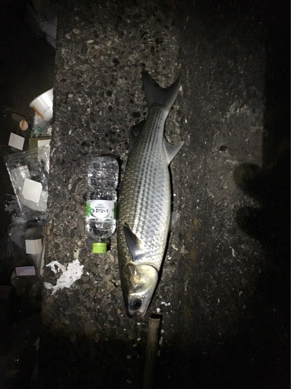進次郎さんの投稿画像,写っている魚はボラ