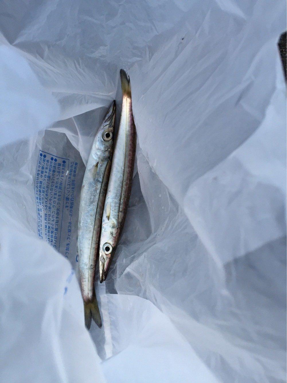 NIKEさんの投稿画像,写っている魚はヤマトカマス
