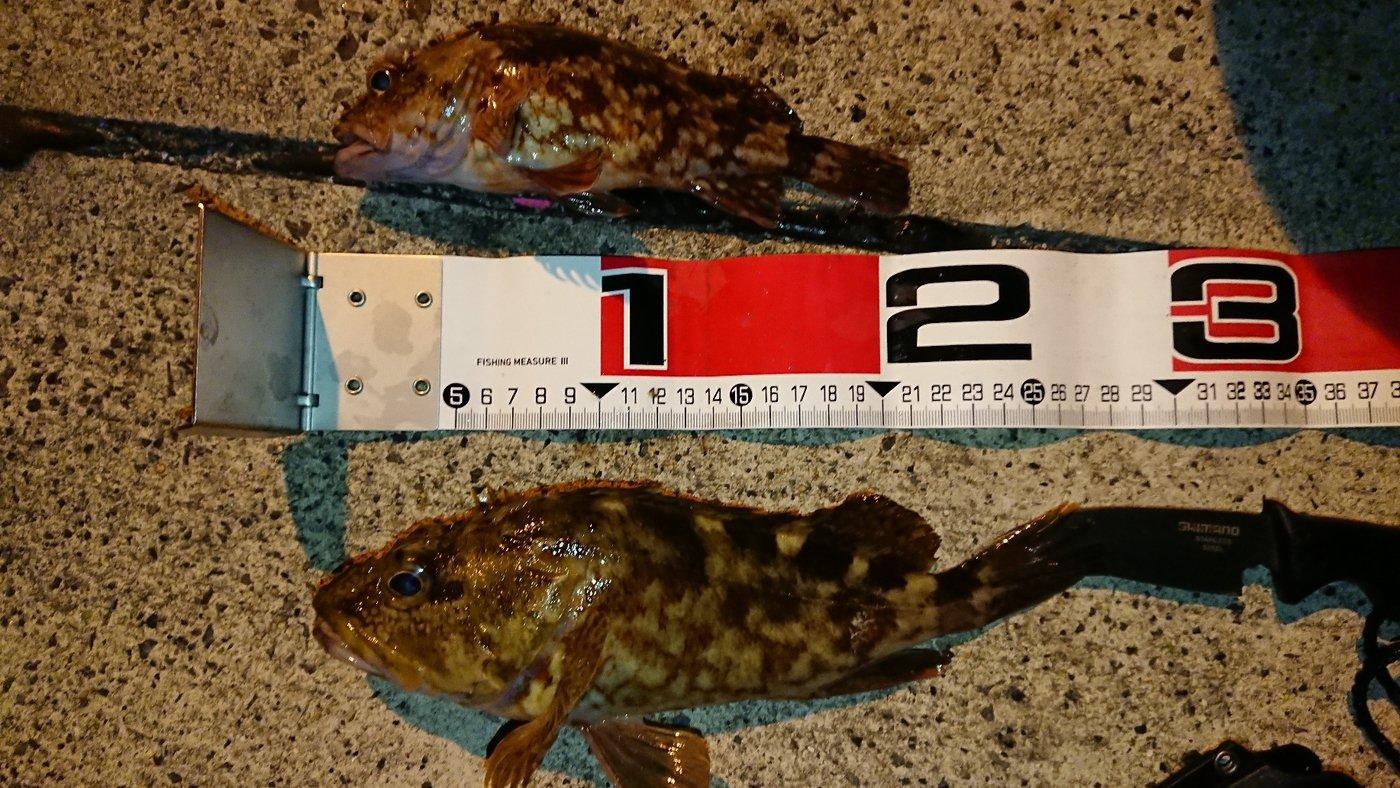 健人さんの投稿画像,写っている魚はカサゴ