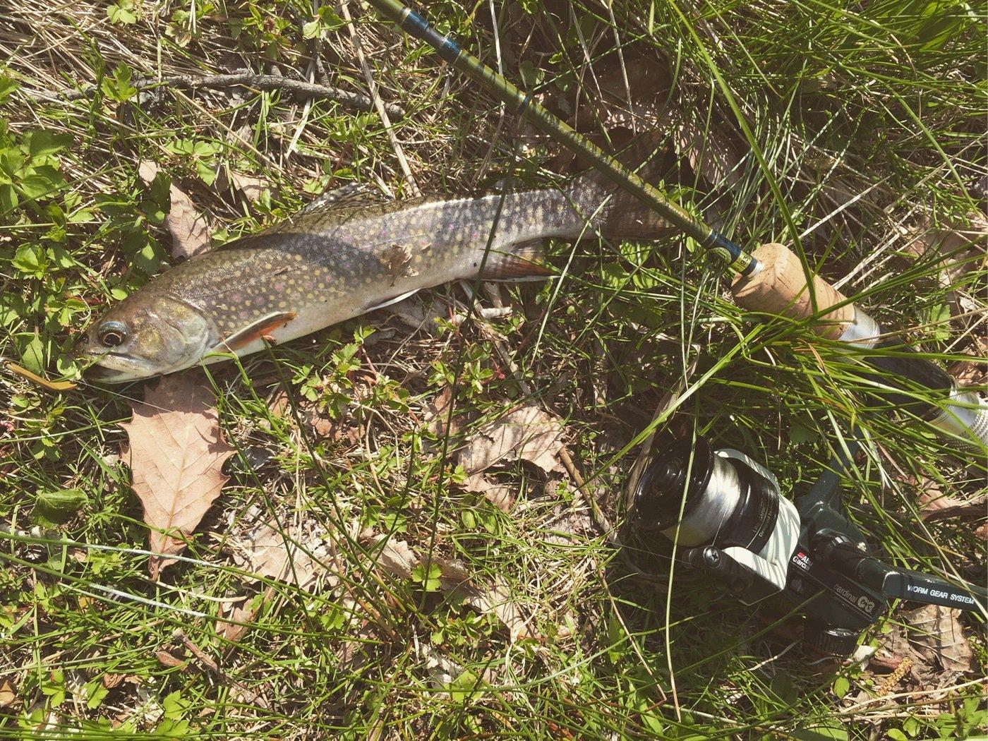 T岡さんの投稿画像,写っている魚はニッコウイワナ