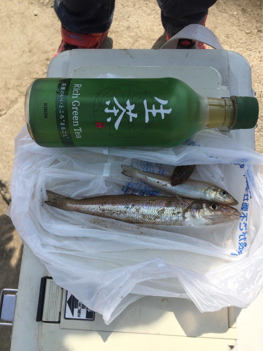 TKAさんの投稿画像,写っている魚はシロギス