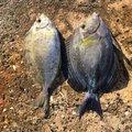 フィッシャーーーさんの沖縄県八重山郡での釣果写真
