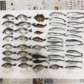 mosoriさんの千葉県安房郡でのクロダイの釣果写真