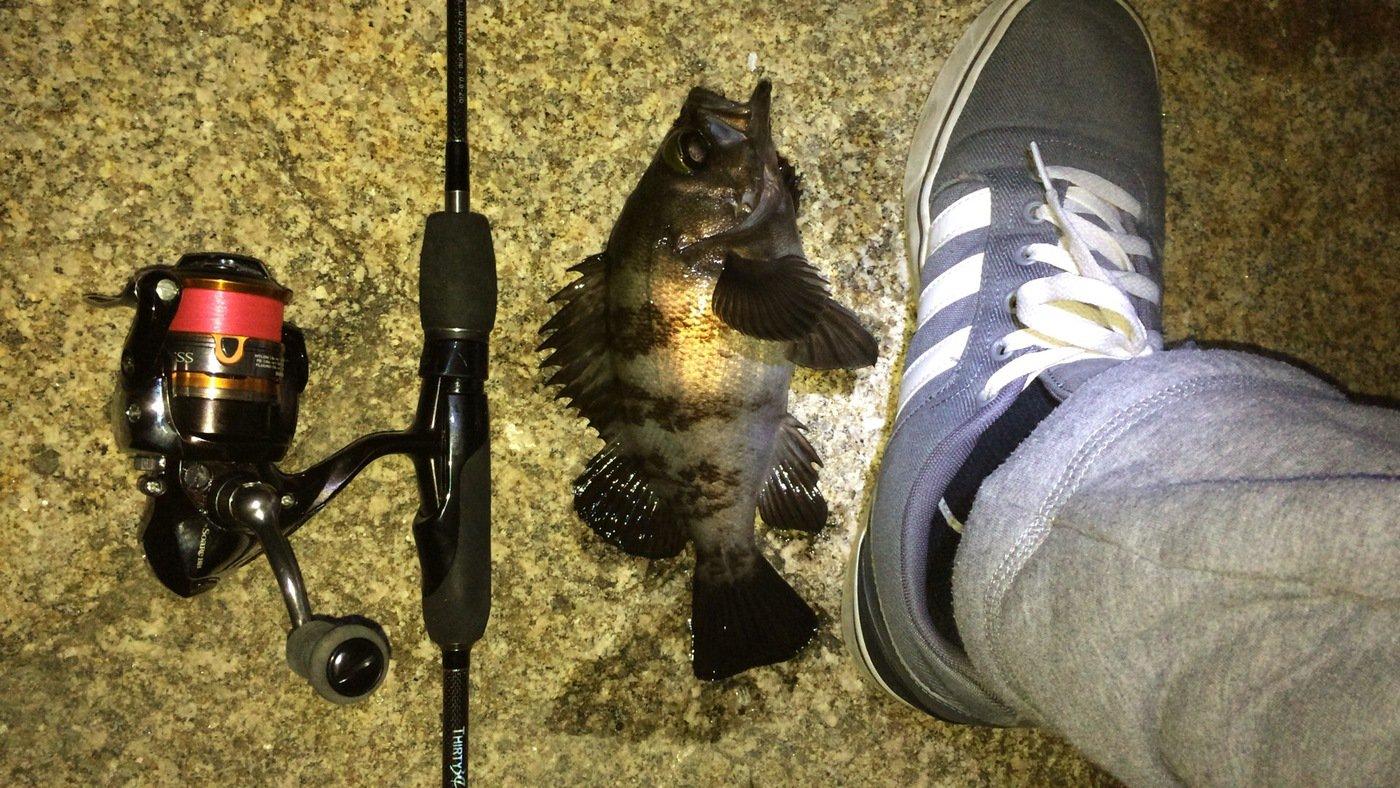 Light®️iggerさんの投稿画像,写っている魚はアカメバル