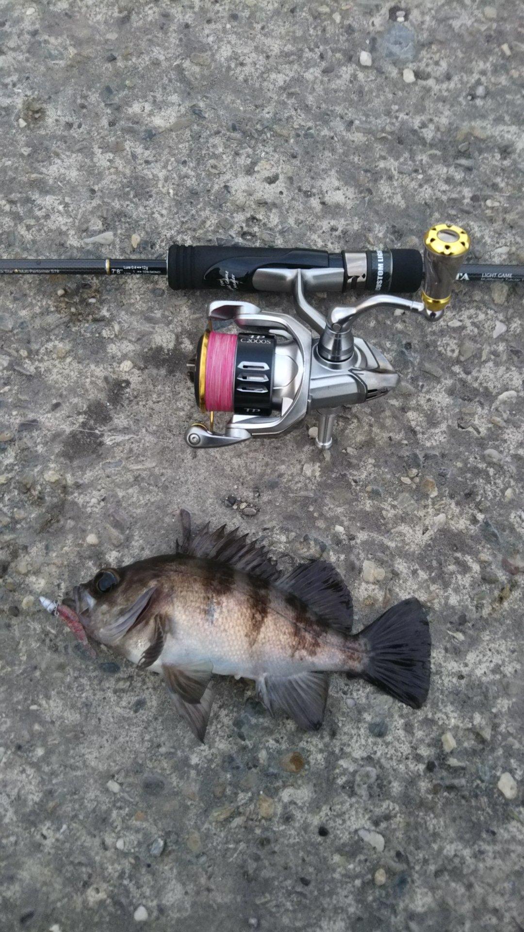 やんぐさんの投稿画像,写っている魚はメバル