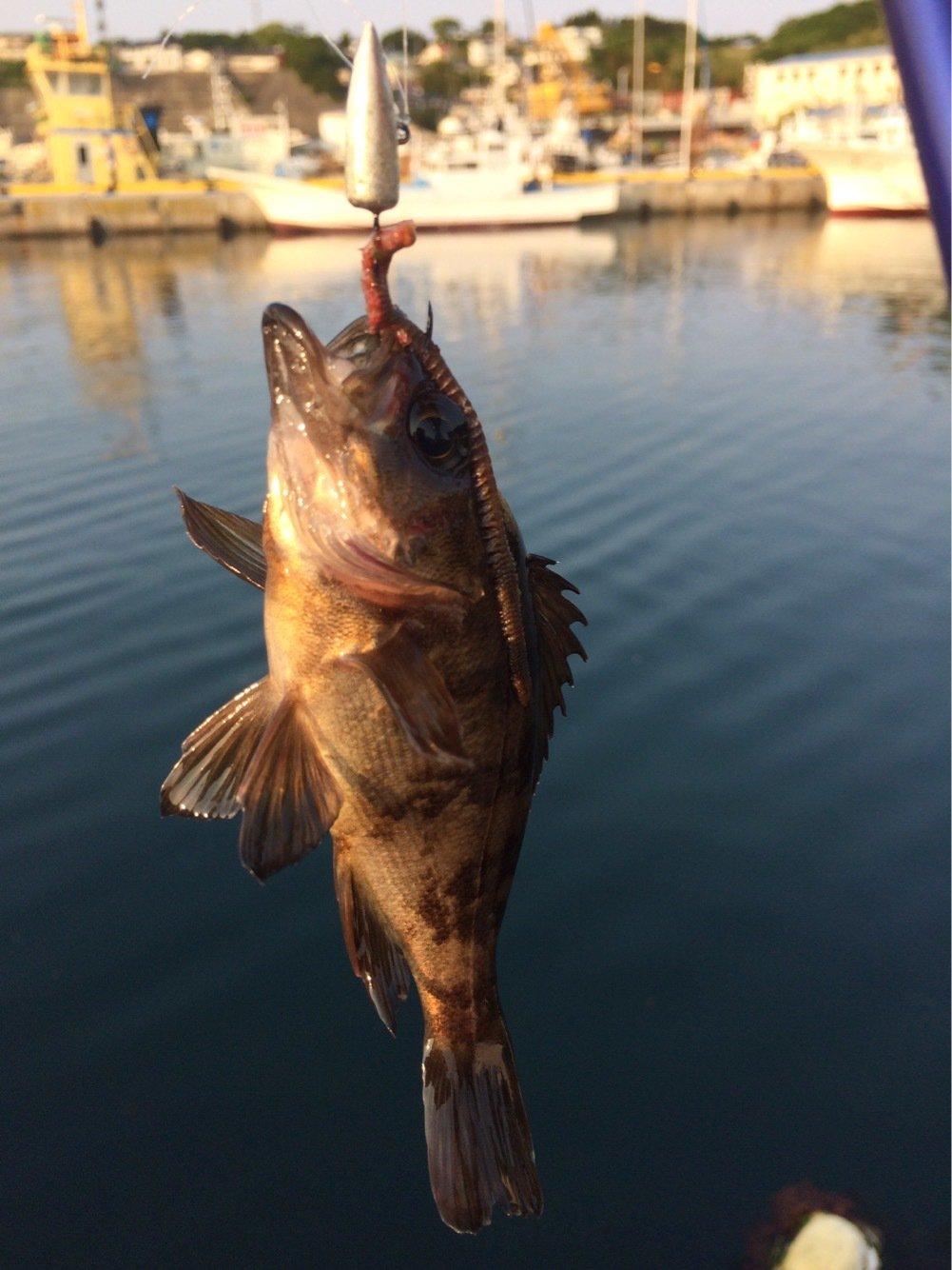 ヒロムンさんの投稿画像,写っている魚はメバル